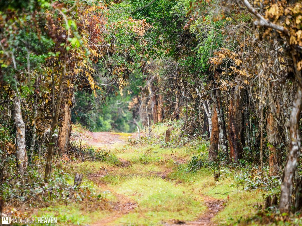 A path through the dense coastal forest of arabuko sokoke