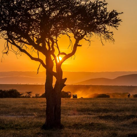 Sun set behind an acacia tree with a safari jeep on the plains of Masai Mara