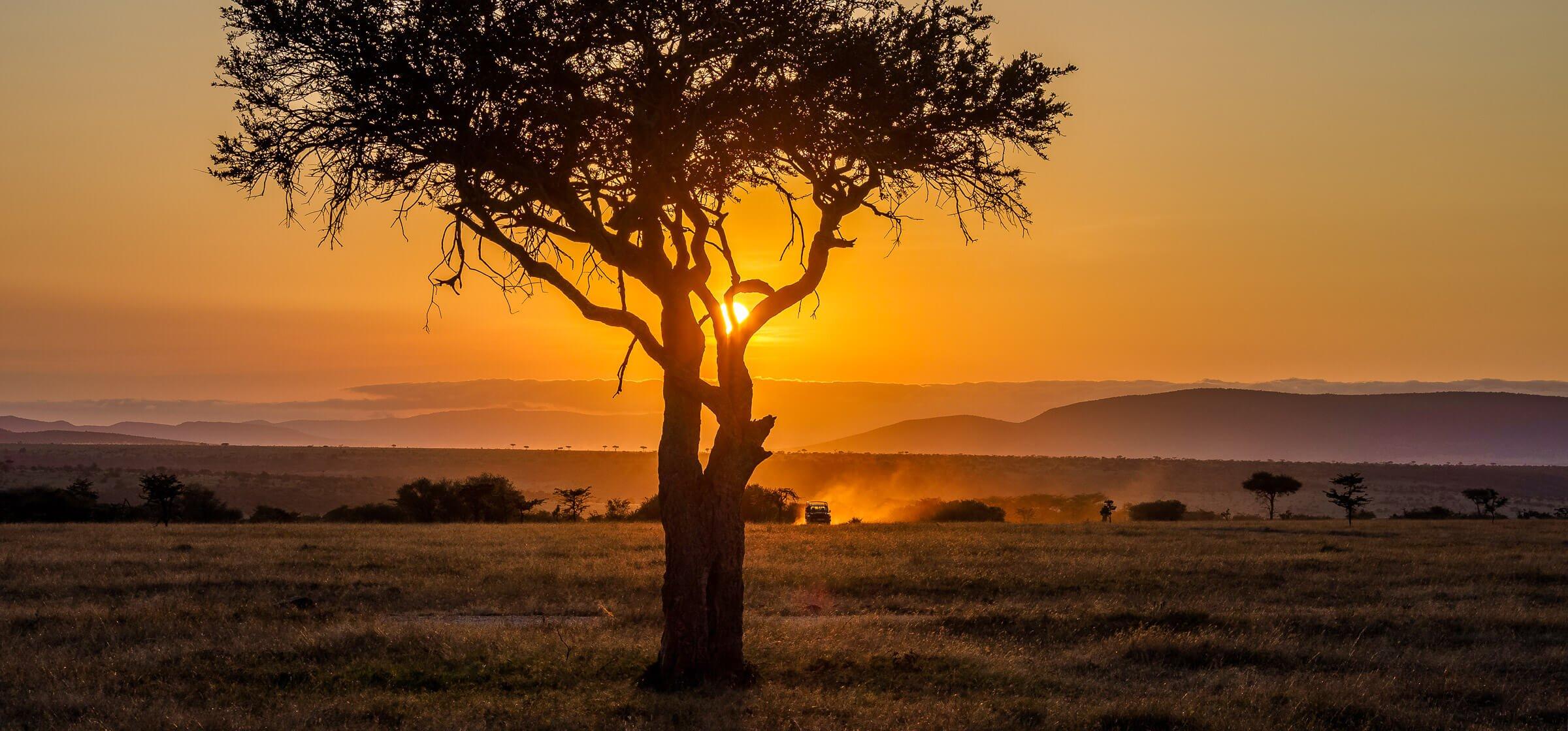 Sun set behind an acacia tree with a safari jeep on the plains of Masai Mara