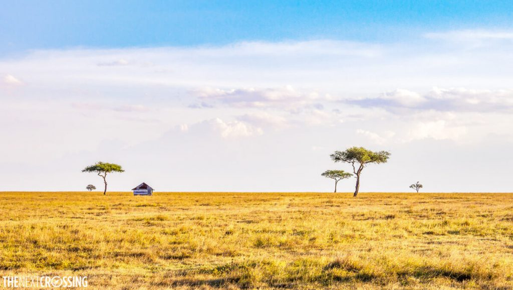 The golden plains of the Mara, dotted with acacia trees and a shed