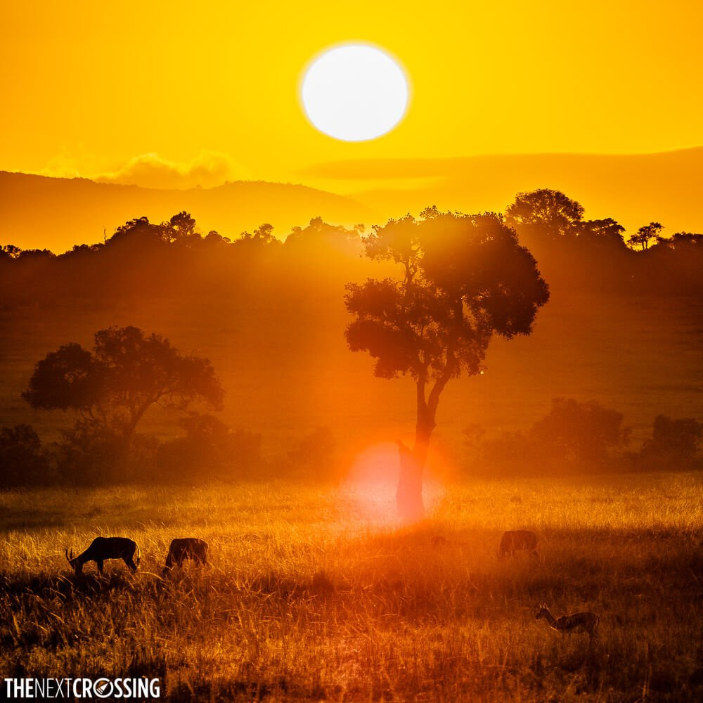 A fiery red sunset over the Masai Mara, with impala silhouetted in the front