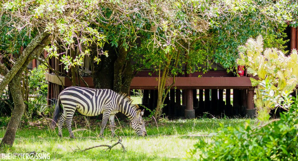 A zebra outside a wooden deck of the Royal Mara Safari Lodge