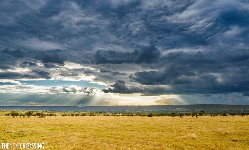 Dark rain clouds gathering over the golden African savannah, sun light breaking through the cloud cover