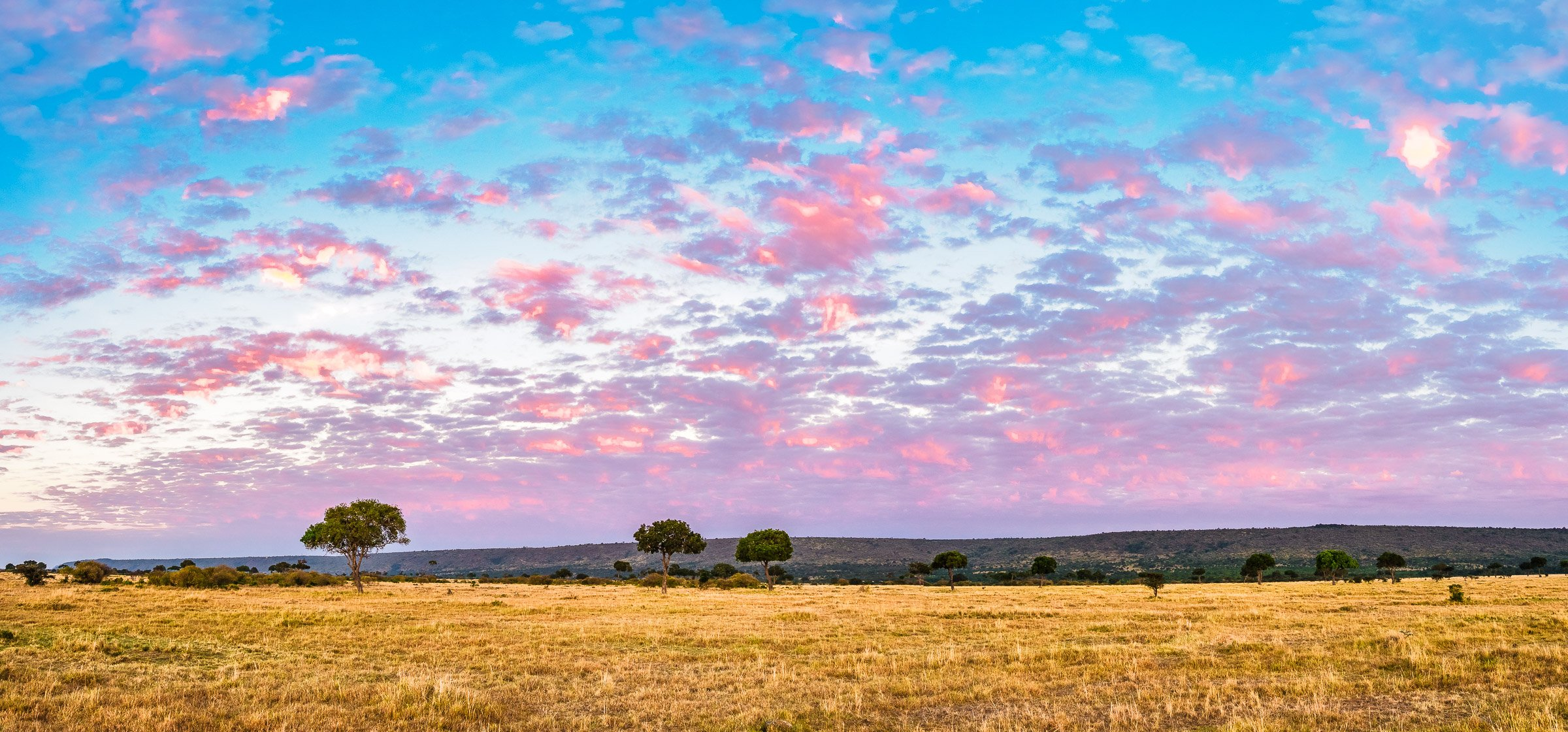 Pink Puffy Clouds Over the Golden Grasses of the Masai Mara, Kenya