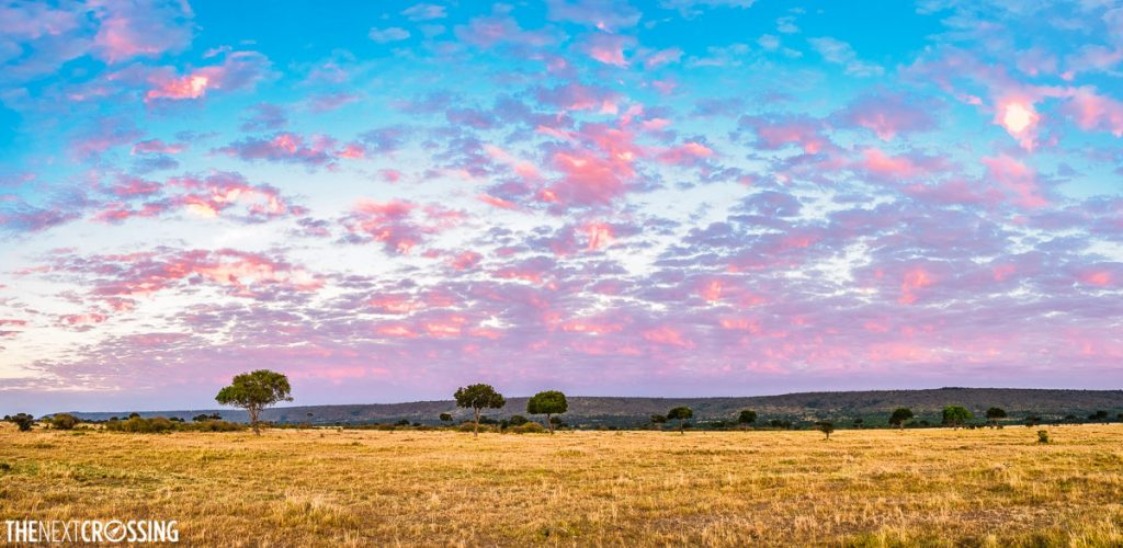 A pink dawn sky on our Masai Mara safari, with golden grass and acacia trees