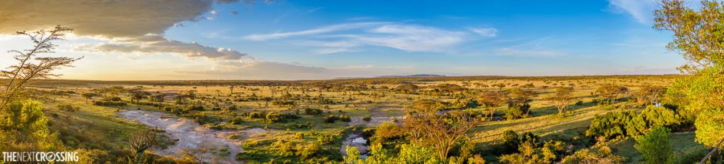 The busy landscape of the Masai Mara during a golden sunset