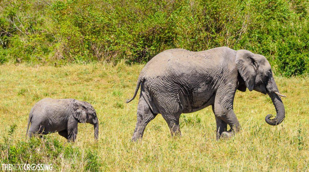 Elephant and calf on the Masai Mara