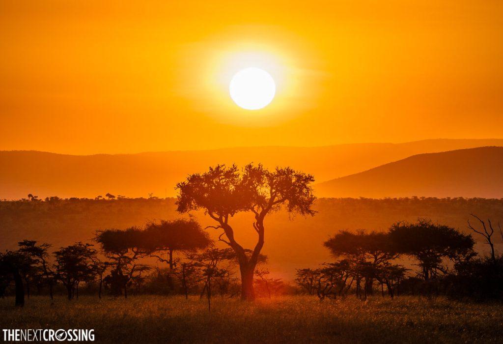 Sun setting behind an acacia tree