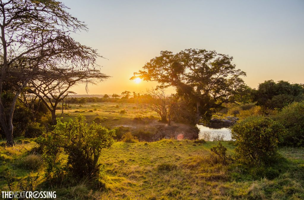 Epic sunset behind an acacia tree on the African plains of the Masai Mara