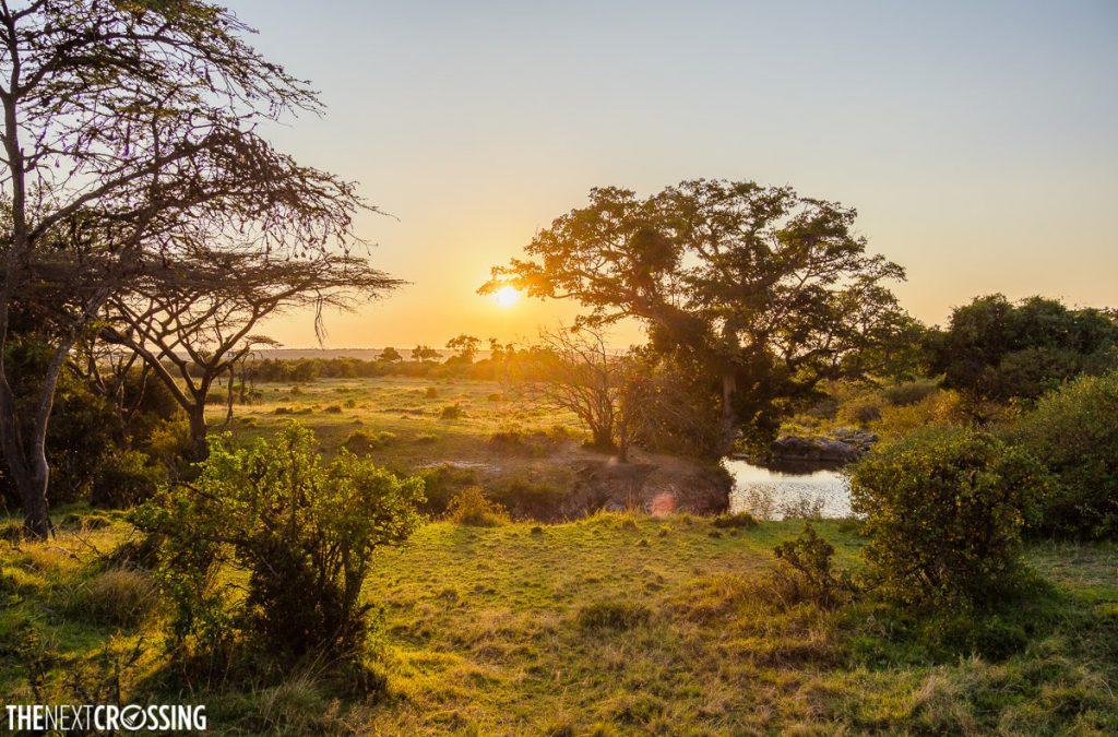 A lush river bank, crossing the Masai Mara