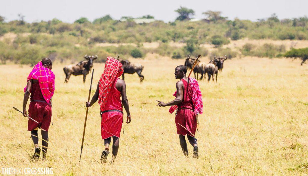 Three Maasai men in colourful shukas walking on the Masai Mara