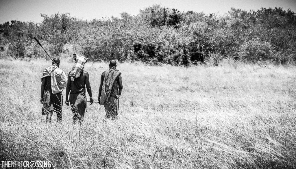Maasai ascari taking us back through the long savannah grass after our walking safari