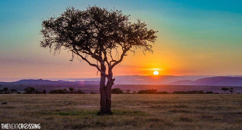 A kaleidoscopic sunrise over the Masai Mara, obligatory acacia in the foreground