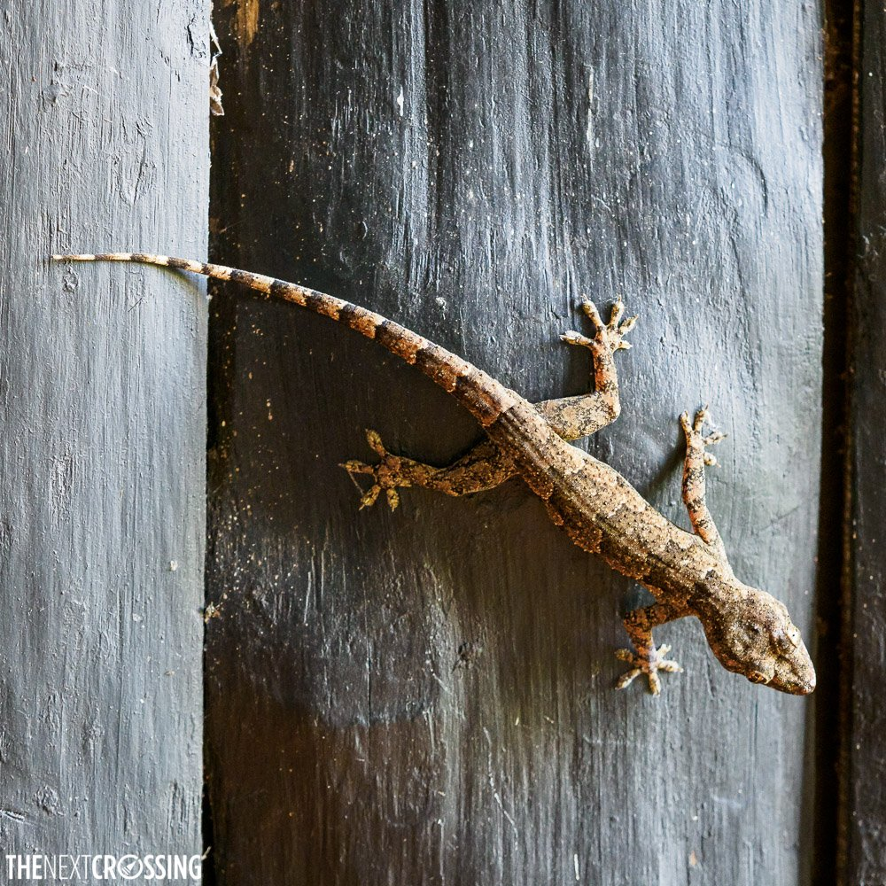 lizard on a wooden wall in Shimba Hills Lodge