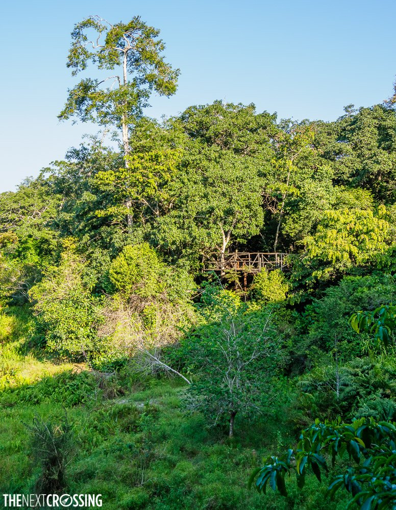 the treetop walk way of shimba hills lodge in the tree canopy