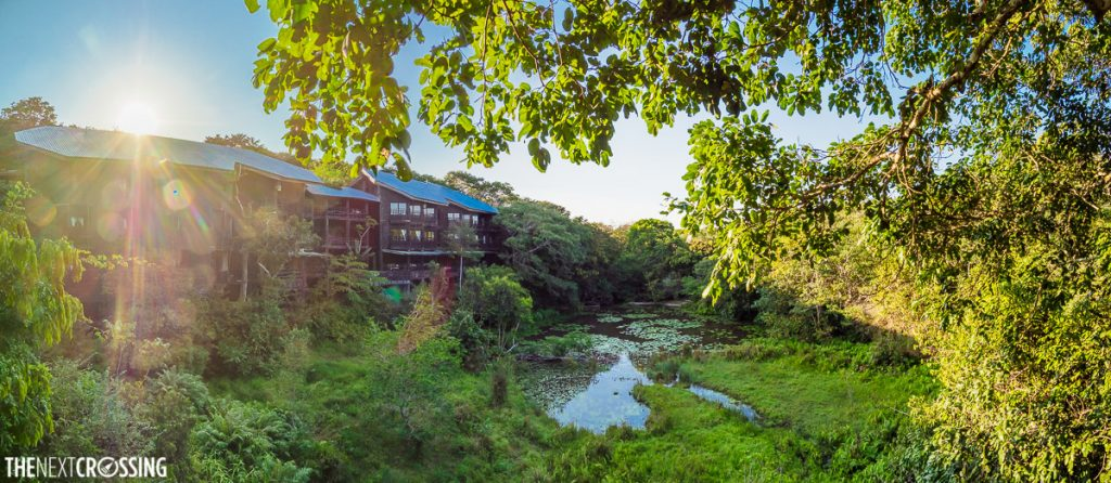 sunrise behind shimba hills lodge, casting the rainforest in a golden glow