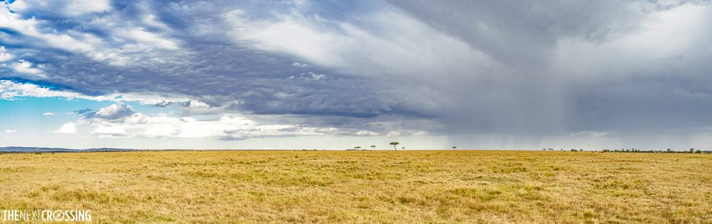 Stormy clouds above the golden plains of the Masai Mara