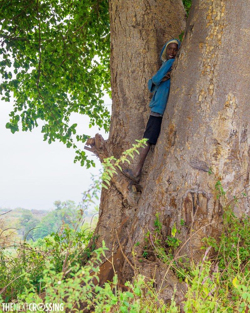 A maasai boy hiding in a tree