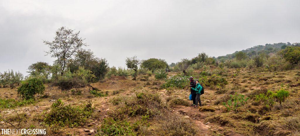 hiking through loita hills, photo taken in the bush