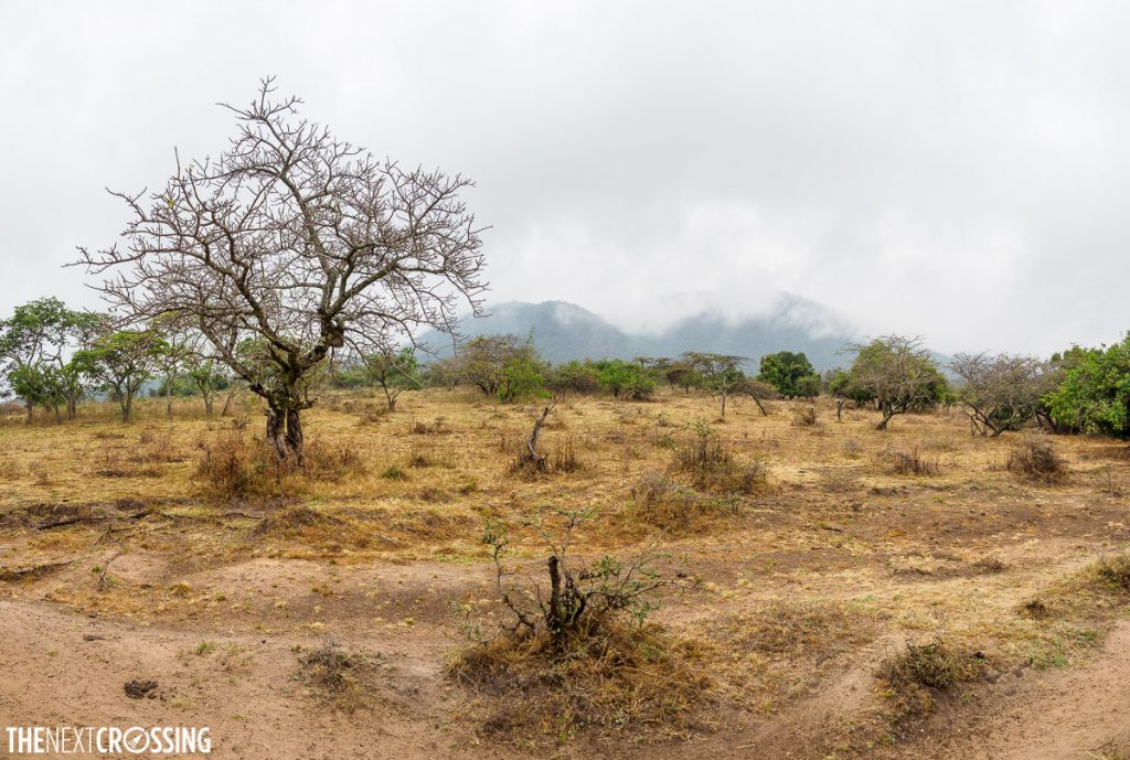 The landscape of Loita Hills is characterised by thorny bushes and low acacia trees