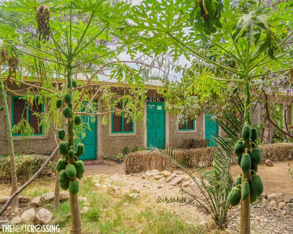 Papaya tree courtyard in front of guesthouse rooms with green doors