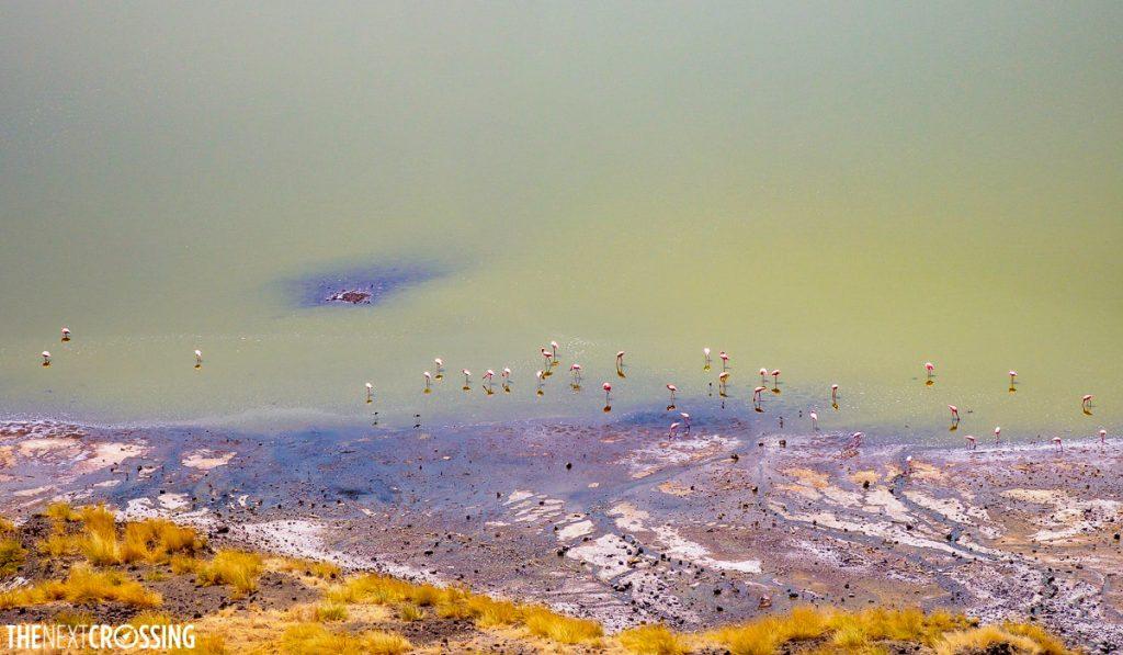 birds eye view of lesser flamingoes on the shore of Lake Magadi