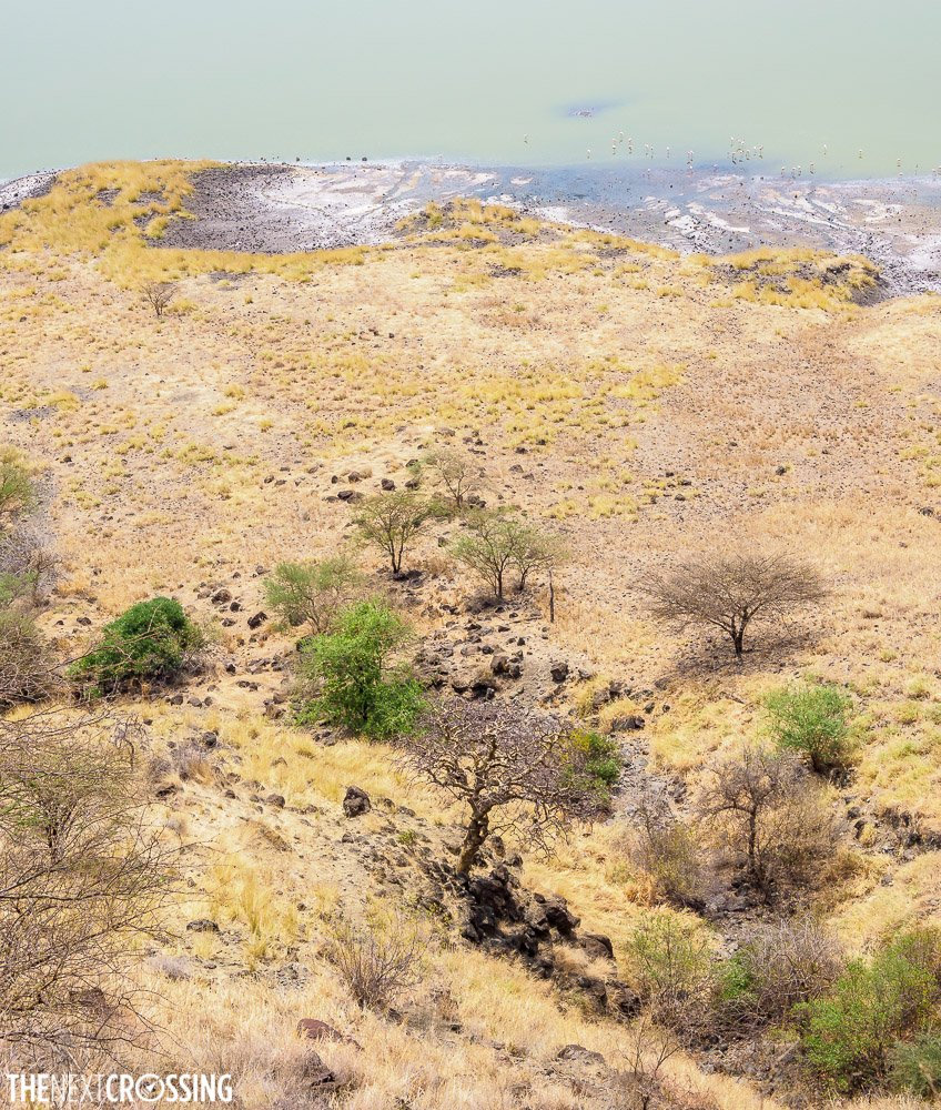 the way down to the edge of the overflowing soda ash lake of magadi