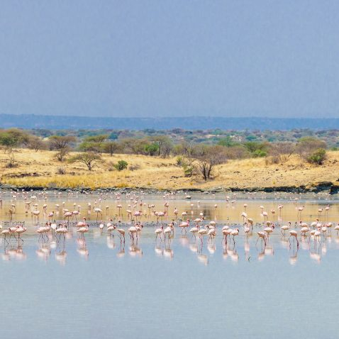flamingoes reflected on a flooded plain near lake magadi