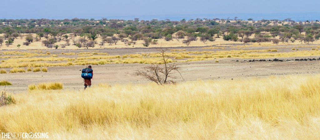 Maasai man hiking through tall golden grass